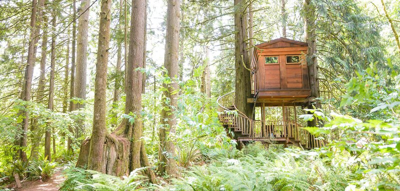 Treehouse point bon bini